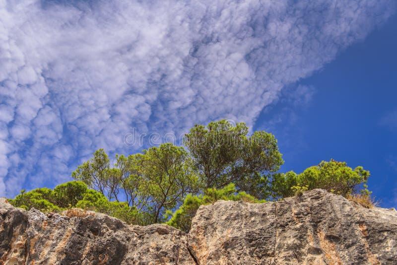 Paysage de nature de parc national de Gargano : côte d'archipelag de ` d'îles de Tremiti, Italie Pouilles Halepensis de pinus photo stock