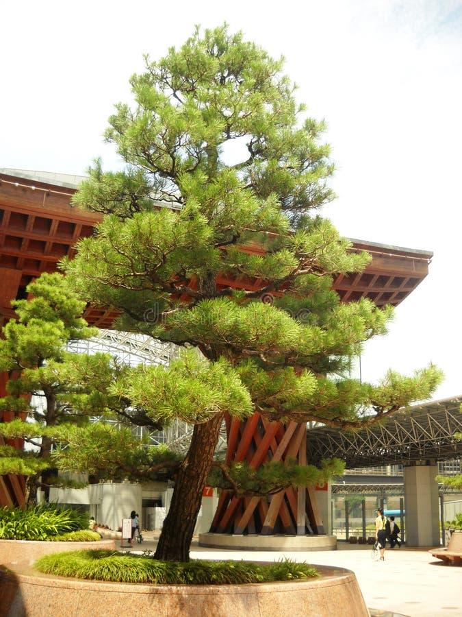 Paysage de nature de Tokyo Japon images stock