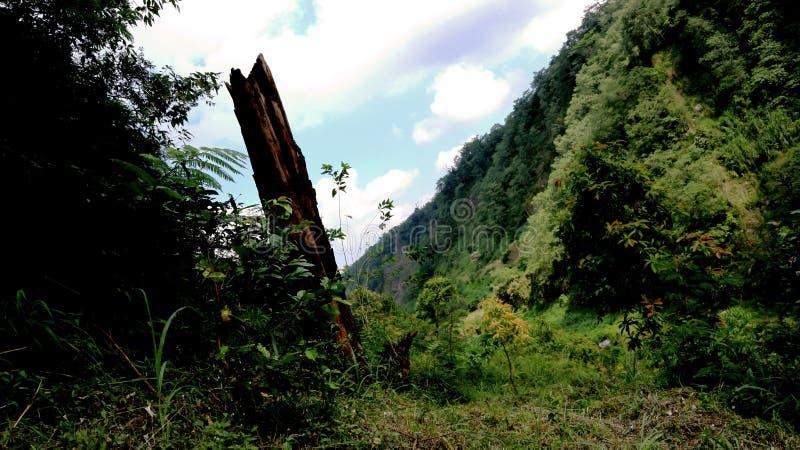 Paysage de nature l'après-midi photographie stock libre de droits