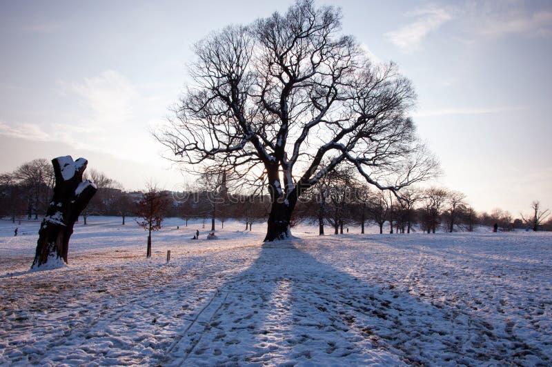 Paysage de neige avec l'arbre photo libre de droits