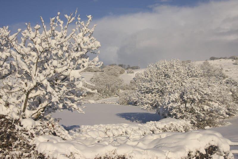 Paysage de neige d'hiver, Cardiff, R-U photographie stock libre de droits