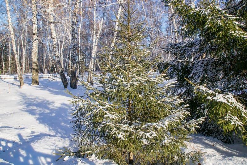 Paysage de neige en bois d'hiver, Russie image stock