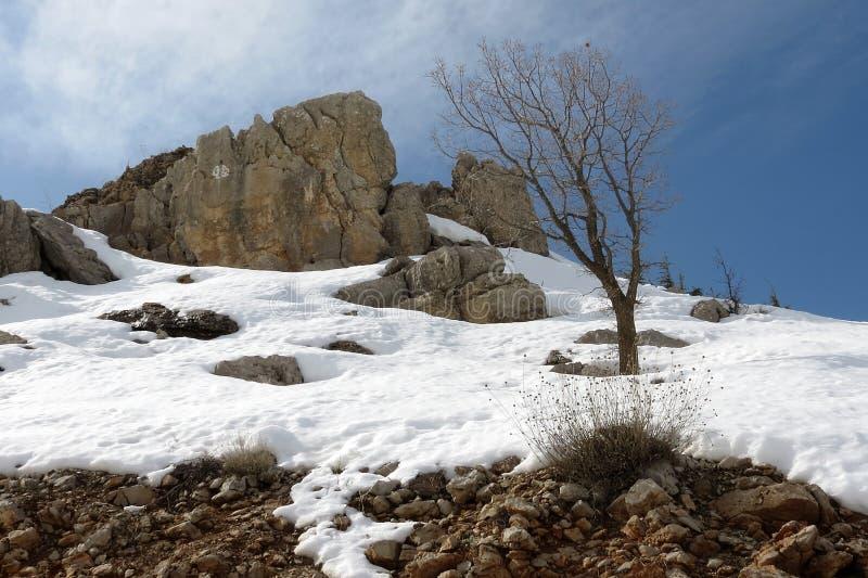 Paysage de neige sur la montagne de Hermon L'Israël 2015 photos stock