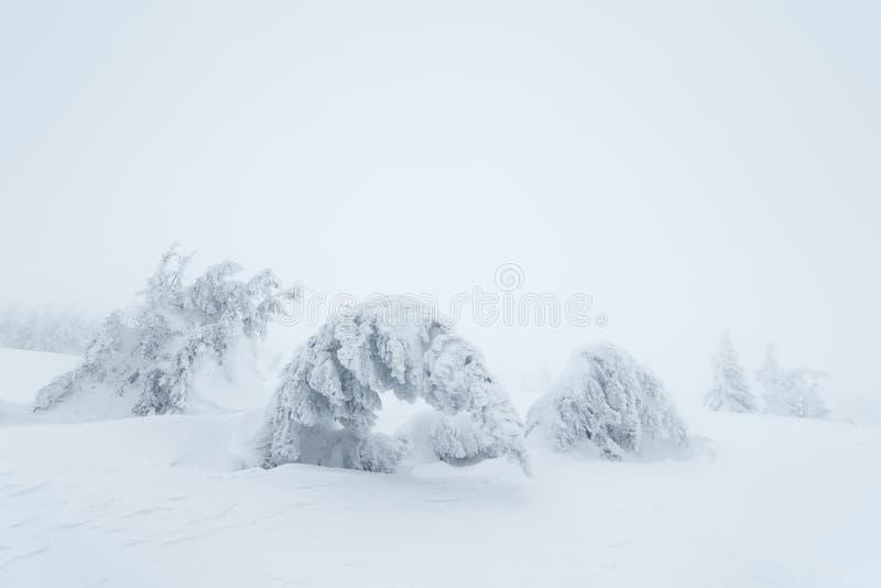 Paysage de Noël avec les arbres neigeux photos libres de droits
