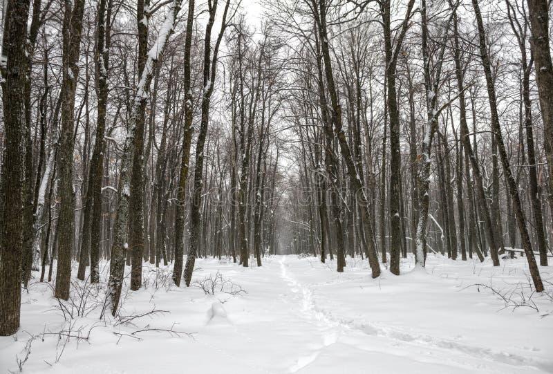 Paysage de nouvelle année de forêt mystérieuse d'hiver avec la tempête de neige photographie stock