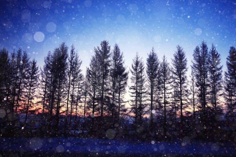 Paysage de nuit avec des arbres photos stock