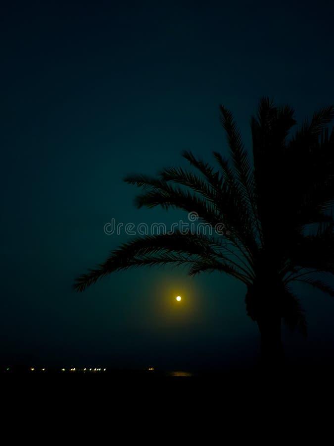 Paysage de nuit sur la plage avec la lune et la silhouette de quelques palmiers image libre de droits