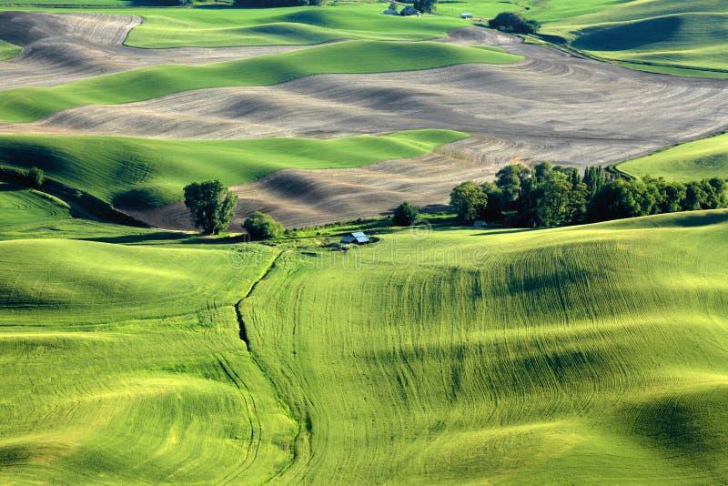 Paysage de Palouse de butte de Steptoe photos libres de droits