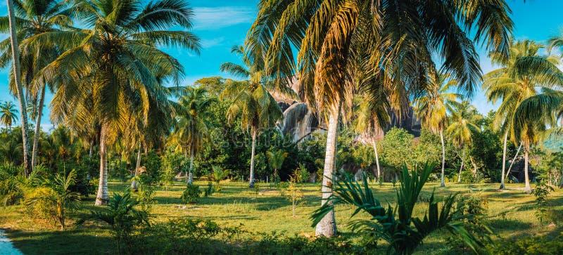 Paysage de panorama de palmeraie en plantation de noix de coco contre des roches de granit et ciel bleu dans L domaine des syndic photo stock