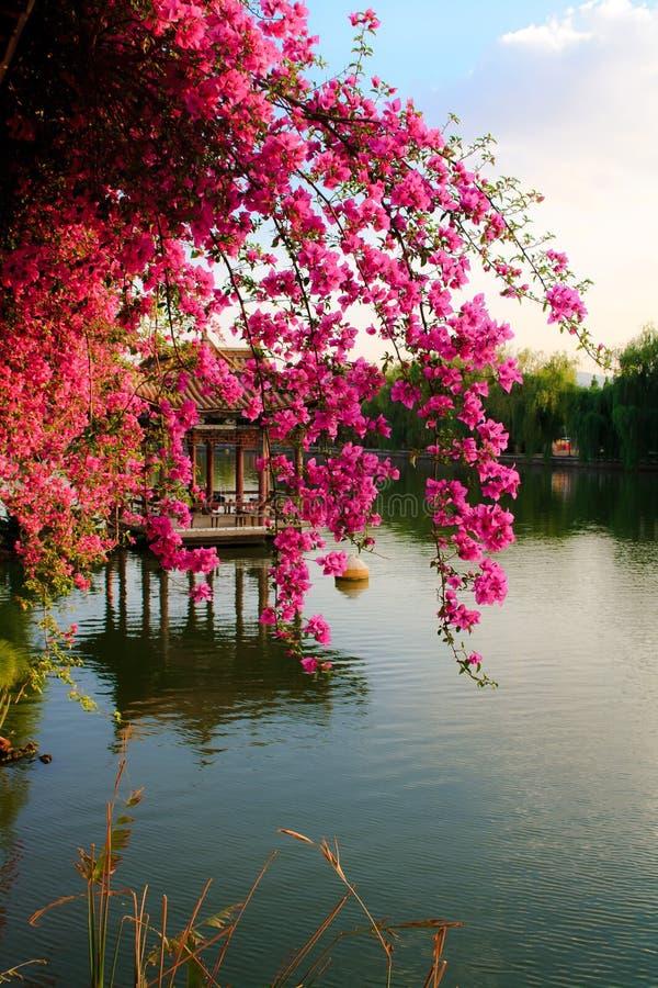 Paysage de parc chinois. image stock