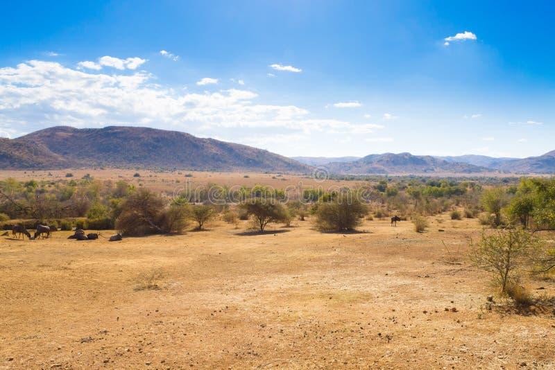 Paysage de parc national de Pilanesberg, Afrique du Sud photo stock