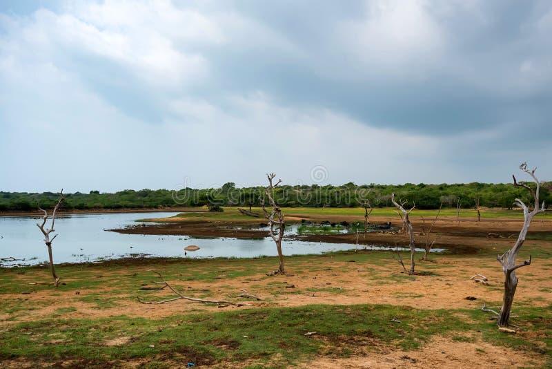 Paysage de parc national de Yala, Sri Lanka image libre de droits