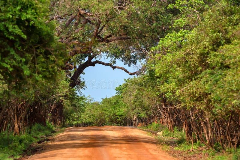 Paysage de parc national de Yala, Sri Lanka photographie stock libre de droits