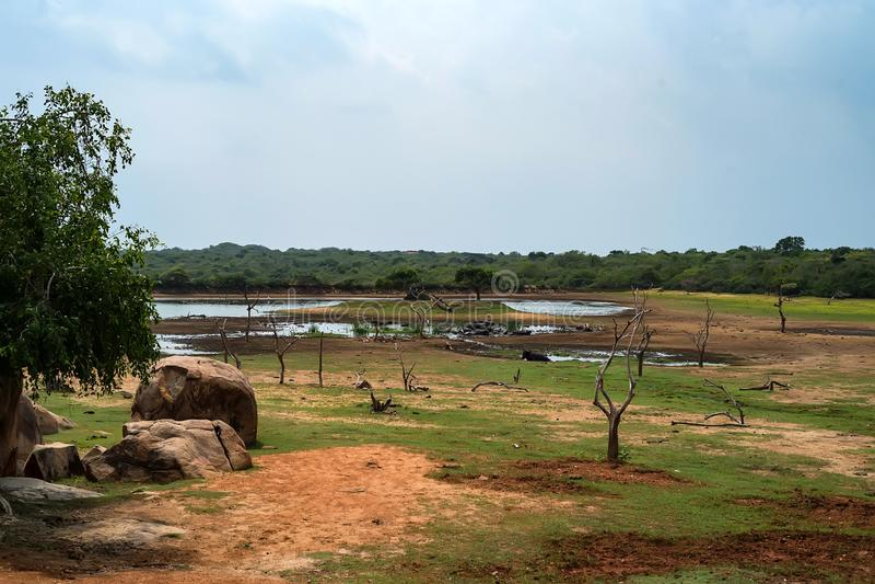 Paysage de parc national de Yala, Sri Lanka image stock