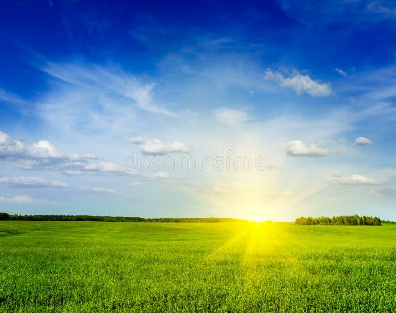 Paysage de paysage de champ de vert d'été de ressort photo libre de droits