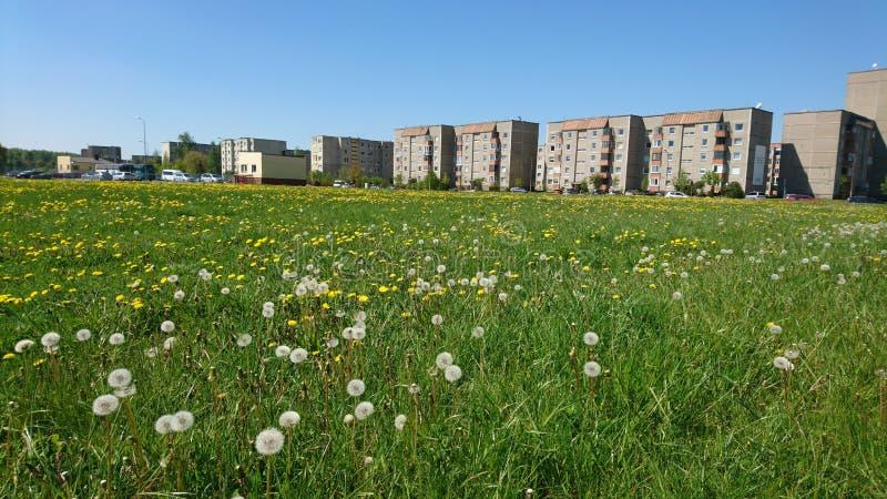 Paysage de peu de ville Mazeikiai en Lithuanie Pré avec les pissenlits blancs photographie stock libre de droits
