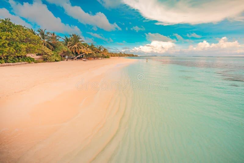 Paysage de plage vintage. Belle vue tropicale, palmiers et mer bleue. Paysage d'été, concept de voyage et de vacances image stock
