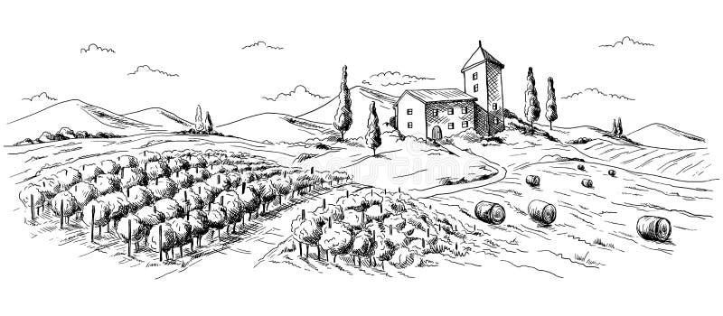 Paysage de plantation de café illustration de vecteur