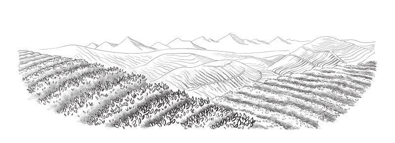 Paysage de plantation de thé illustration libre de droits