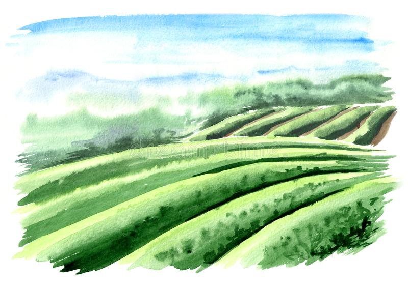 Paysage de plantation de thé Illustration tirée par la main d'aquarelle illustration de vecteur