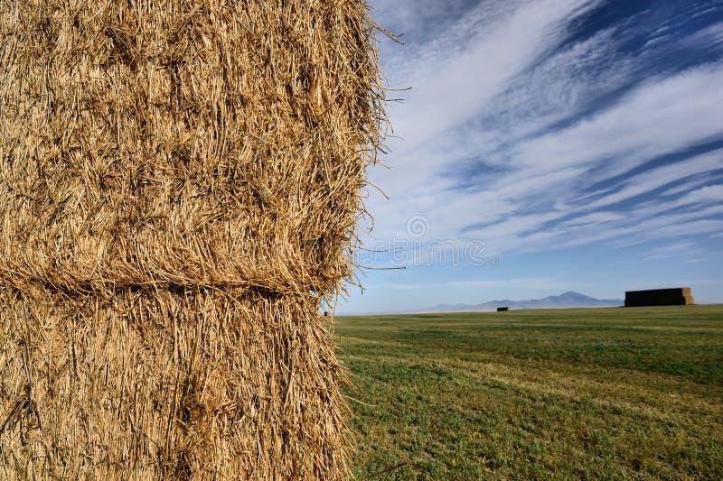 Paysage de prairie photographie stock libre de droits