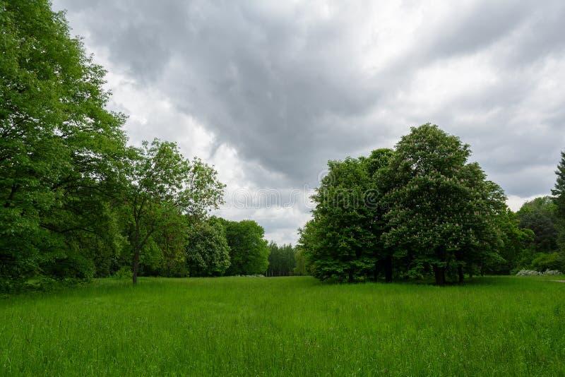 Paysage de ressort avec le pré, la châtaigne fleurissante et d'autres arbres image libre de droits
