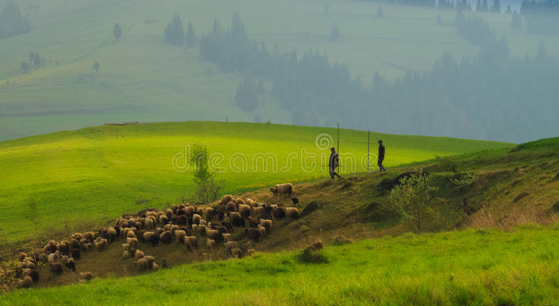 Paysage de ressort dans les montagnes carpathiennes avec  photographie stock