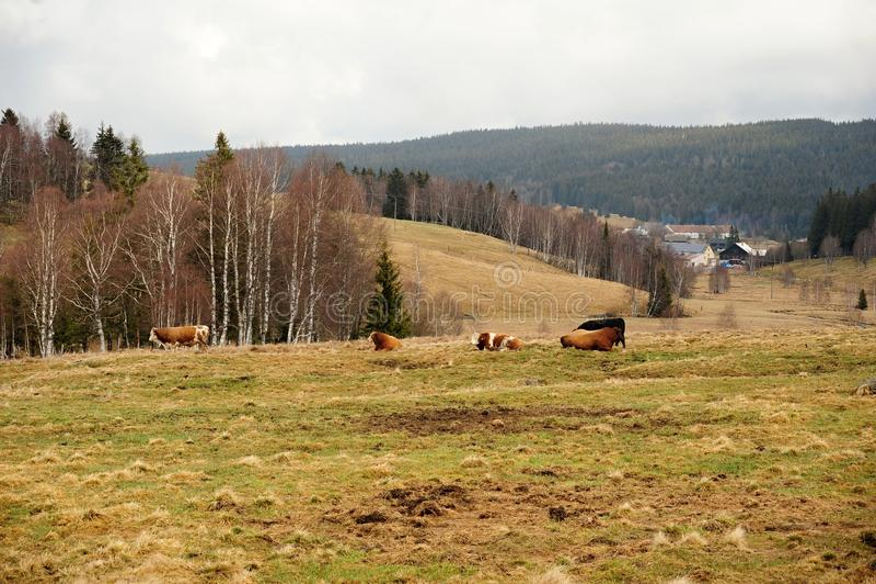 Paysage de ressort dans Sumava photos stock