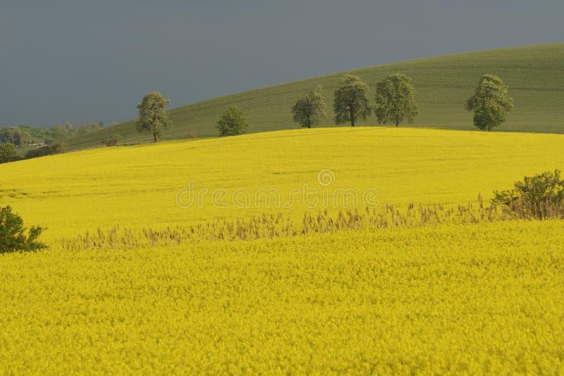 Paysage de ressort de la Moravie du sud avec un colza oléagineux se développant image libre de droits
