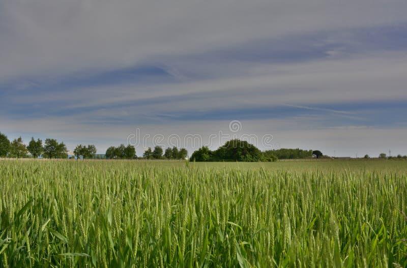 Download Paysage De Ressort Près De Cividale Del Friuli Photo stock - Image du collectes, beau: 76084946