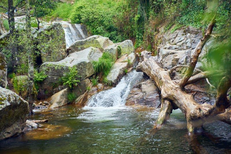 Paysage de rivière avec la cascade et un tronc d'arbre tombé à l'intérieur de l'eau images libres de droits