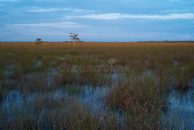 Paysage de soirée des marais photos stock