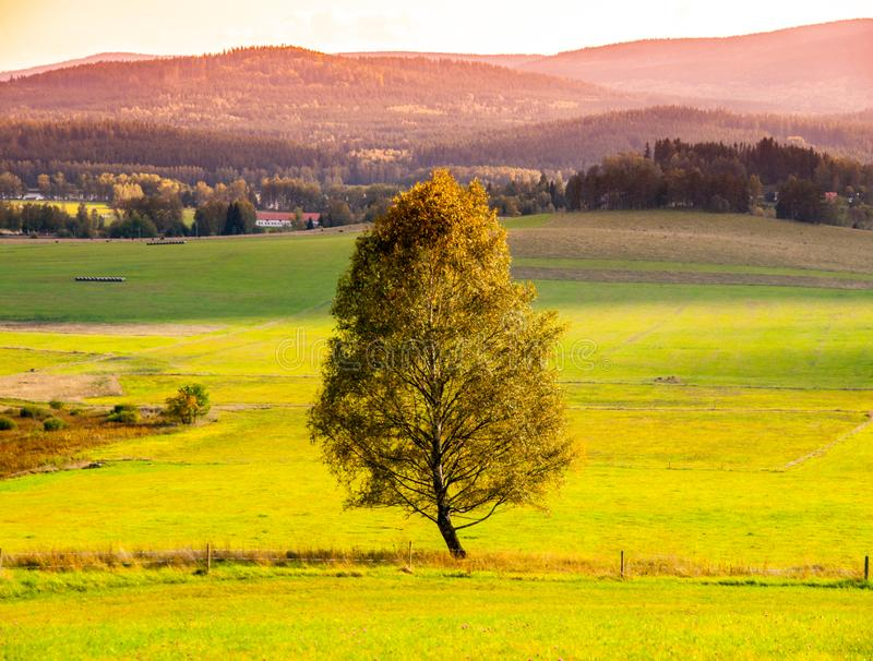 Paysage de Sumava avec l'arbre seul au milieu du pré, République Tchèque photos libres de droits