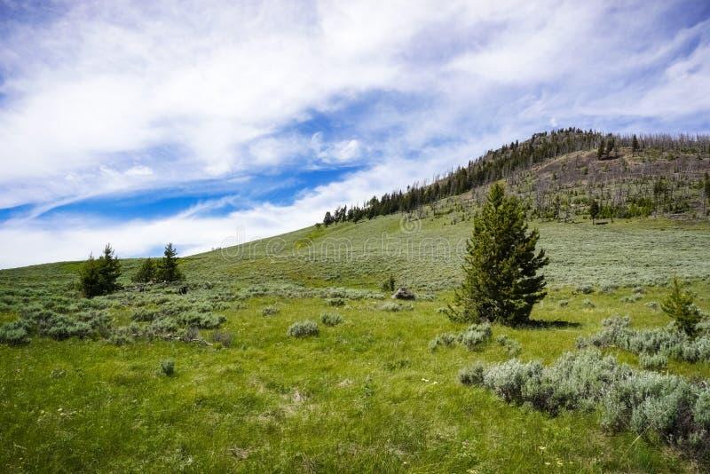 Paysage de traînée de crête de Bunsen, parc national de Yellowstone, Wyoming photos libres de droits