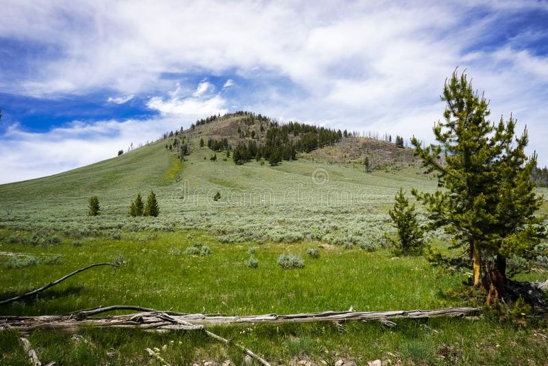 Paysage de traînée de crête de Bunsen, parc national de Yellowstone, Wyoming photographie stock