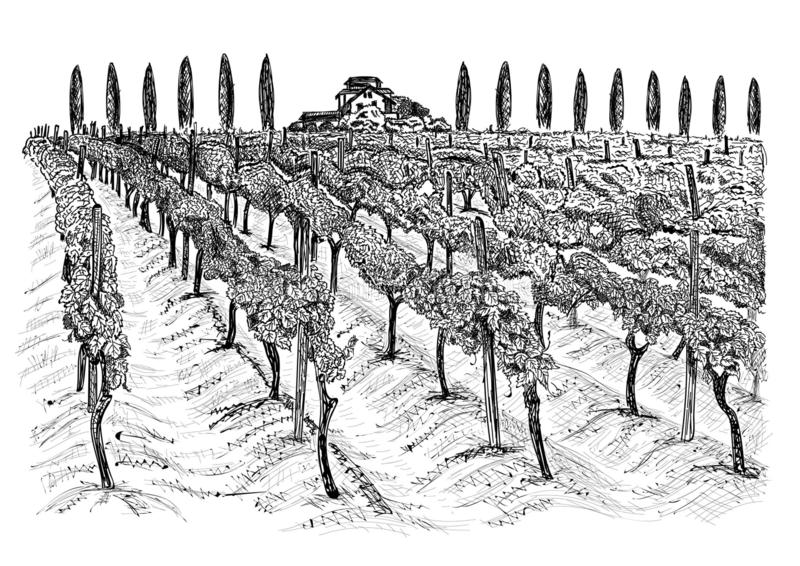 Paysage de vignoble avec le b?timent sur la colline et les arbres ? cot? Illustration tir?e par la main de vecteur de croquis d'i illustration de vecteur