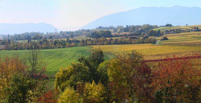 Paysage de vignoble d'automne photographie stock
