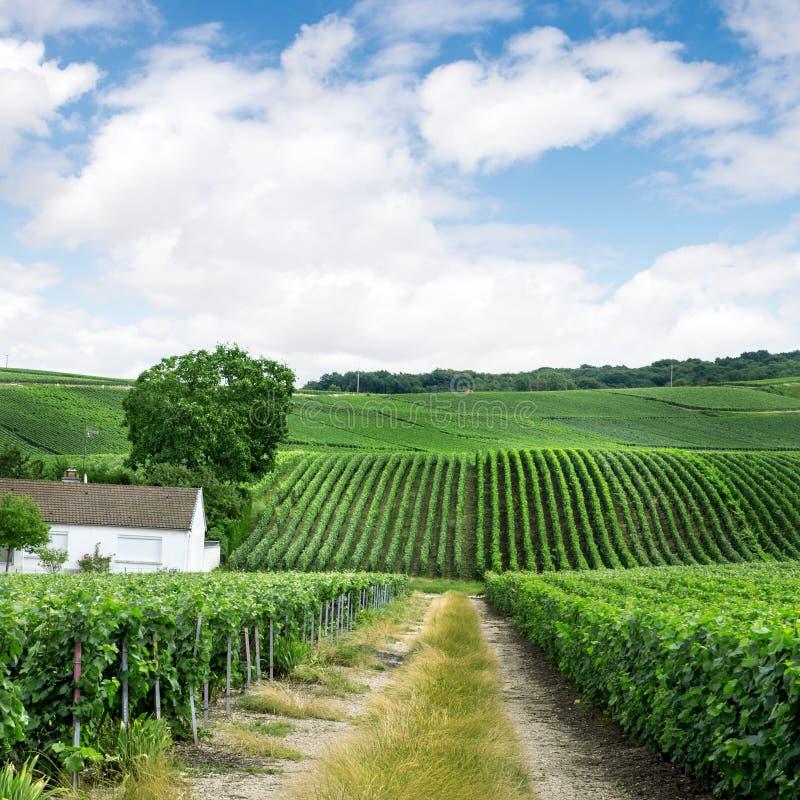 Paysage de vignoble dans les Frances photos stock