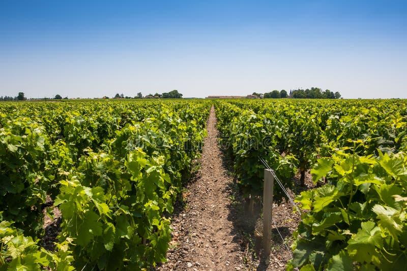 Paysage de vignoble près de Bordeaux, France image libre de droits