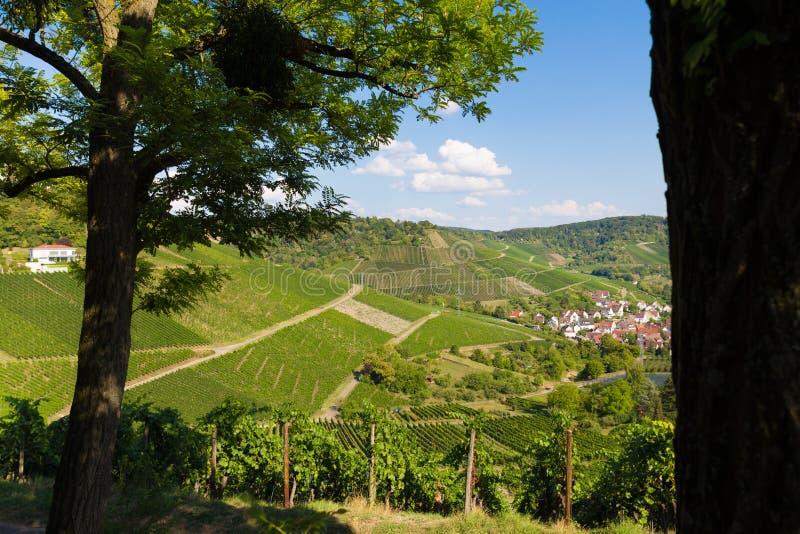 Paysage de vignoble près de Stuttgart Allemagne photographie stock libre de droits