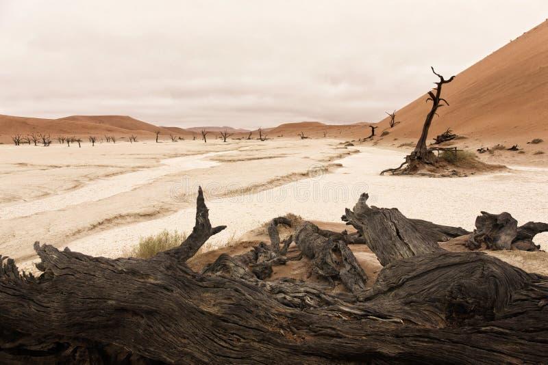 Paysage de Vlei mort, Sossusvlei, désert de Namib, Namibie, sud photo libre de droits
