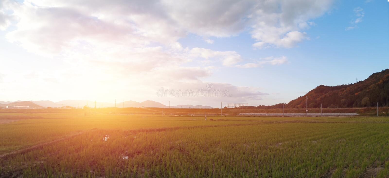 Paysage de vue de panorama de gisement de riz et de gamme de montagne sur le fond de coucher du soleil au Japon images stock