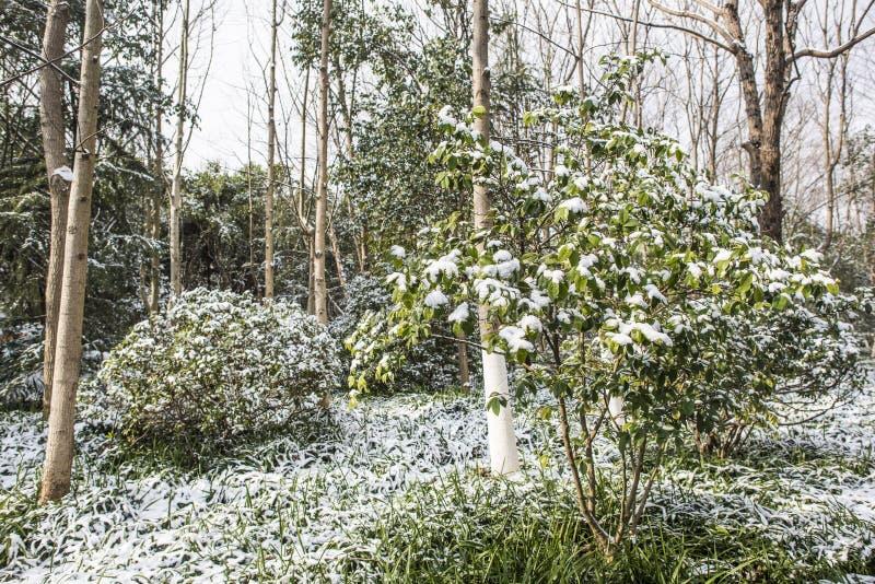 Paysage de Xiamafang après la neige images libres de droits