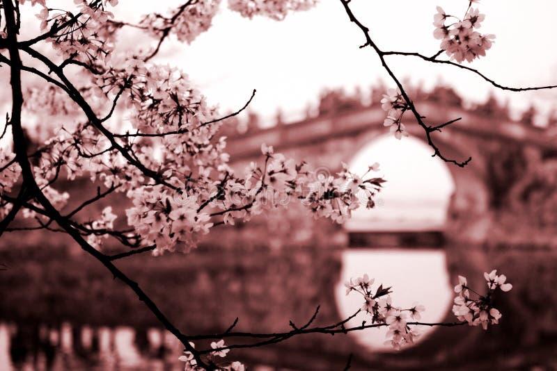 Paysage de Yuantouzhu image libre de droits