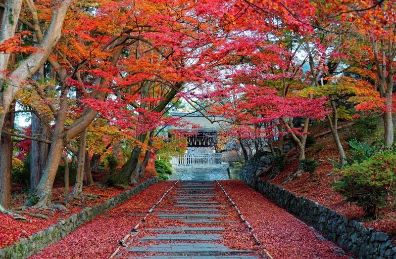Paysage des arbres d'érable ardents à l'entrée Sandou à Bishamon Hall Bishamondo, un temple bouddhiste célèbre images stock