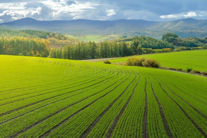 Paysage des collines de campagne avec la ferme de gisement de riz, forêt et image stock