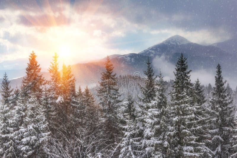 Paysage des montagnes d'hiver au soleil La vue des chutes de neige et la neige ont couvert des collines photos libres de droits