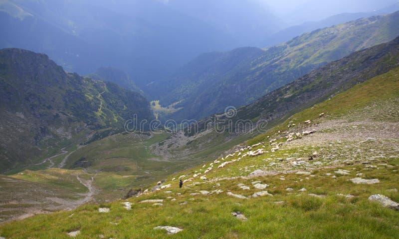 Paysage des montagnes de Fagaras en Roumanie photographie stock