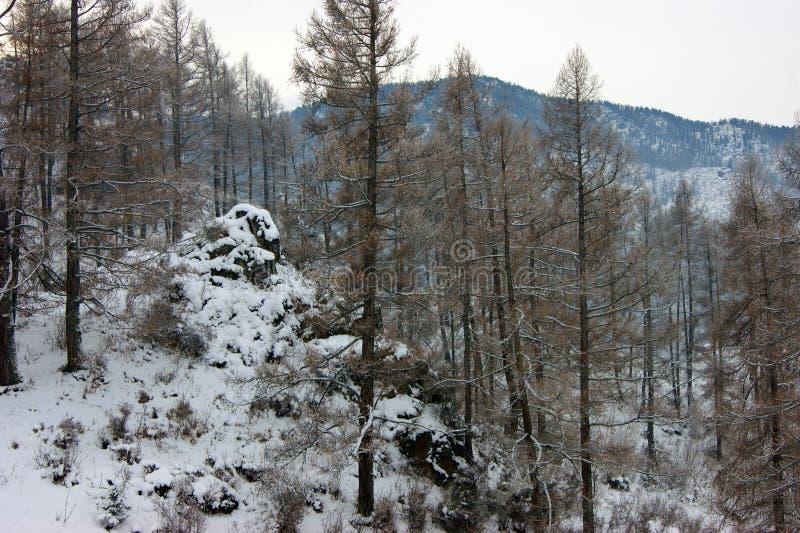 Paysage des montagnes et du bois en hiver photos libres de droits