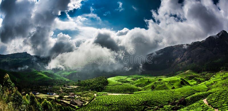 Plantations de thé en Inde image stock